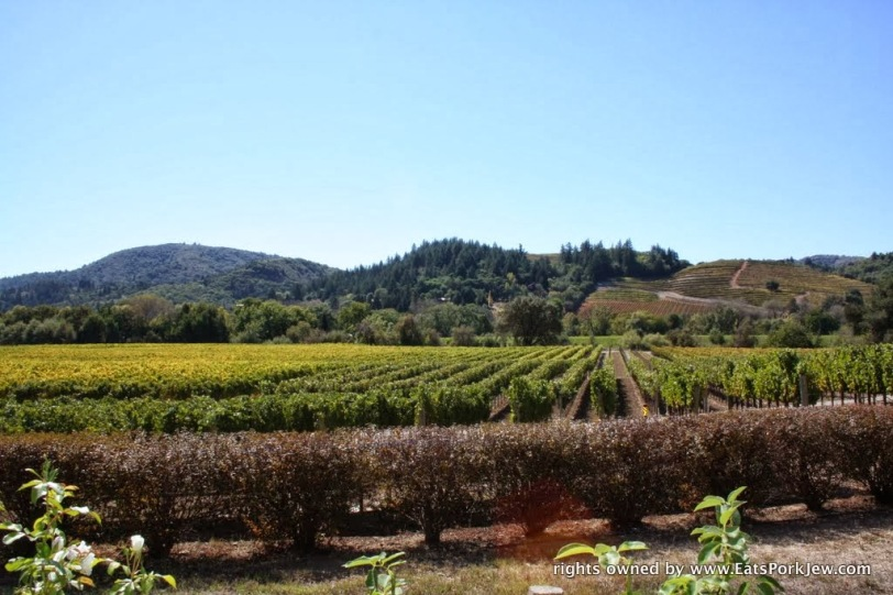 views-dry-creek-valley-wineries