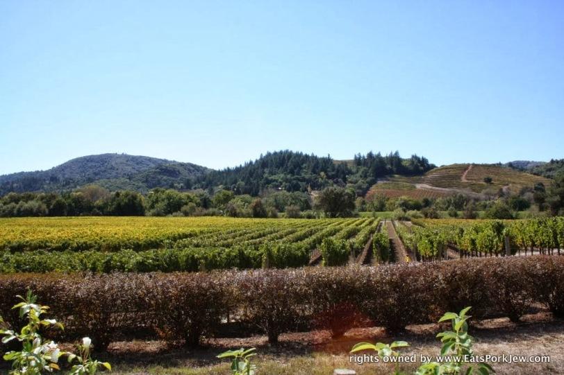 views-dry-creek-valley-wineries