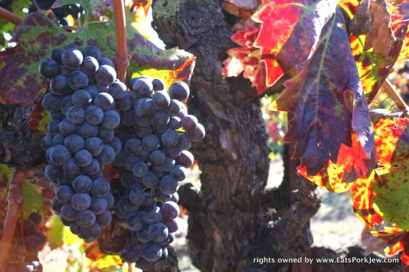 food-travel-blog-grape-harvest