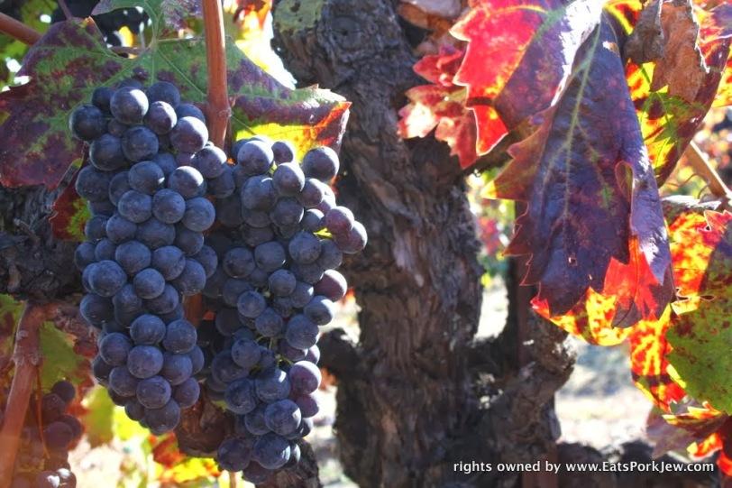 food-travel-blog-grape-harvest