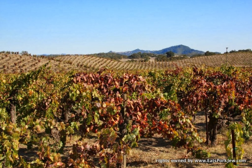 food-travel-blog-fall-vines